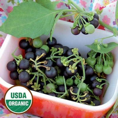 Sunberry Plant Seeds (Organic) | Planet Natural