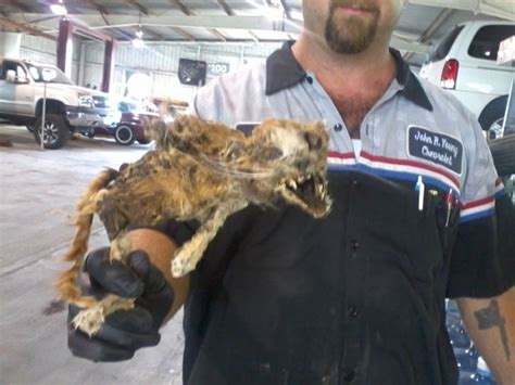 Cats sleeping on my engine!! - Page 5 - Ford F150 Forum