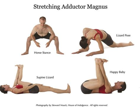 Great Muscles to Know: The Adductor Magnus - Anatomy