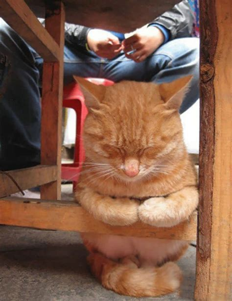 23 Funny Pictures Of Cats Sleeping In Crazy Positions   Top13