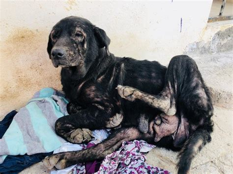 Heartbreaking discovery of dogs wasting away on Mexico