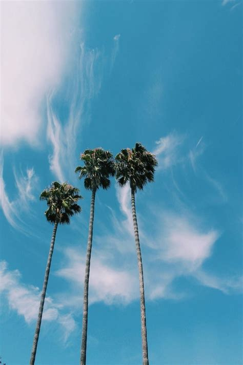 Beautiful Palm Tree Pictures, Photos, and Images for