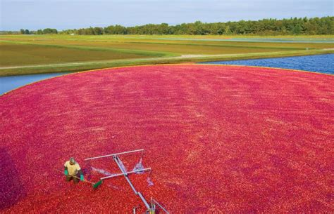 Wisconsin Grows Great Variety of Specialty Crops - Farm Flavor